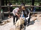 14. državna kiparska delavnica LES